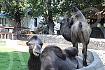 Animals in Belgrade zoo. 